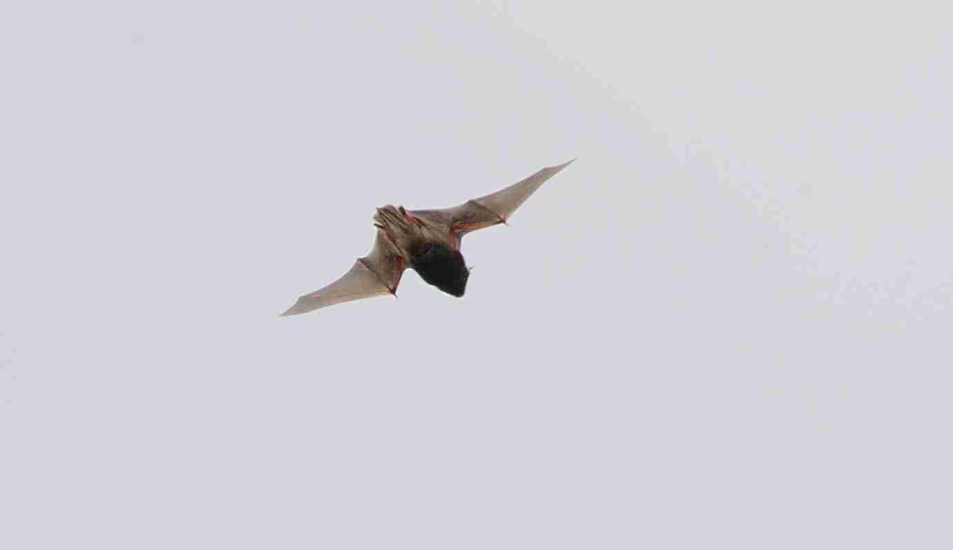 蝙蝠_0212