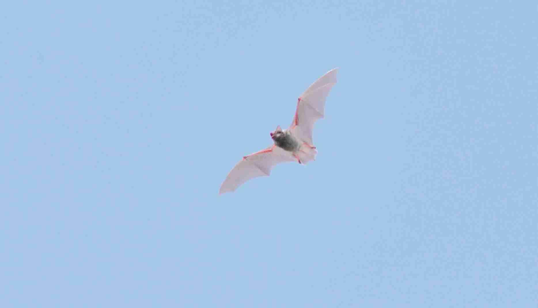 蝙蝠_0225