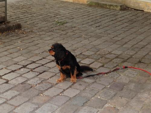 カラフル黒犬