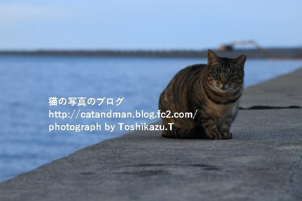 IMG_0903s.jpg