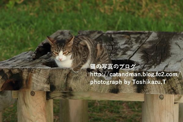 IMG_0992s.jpg