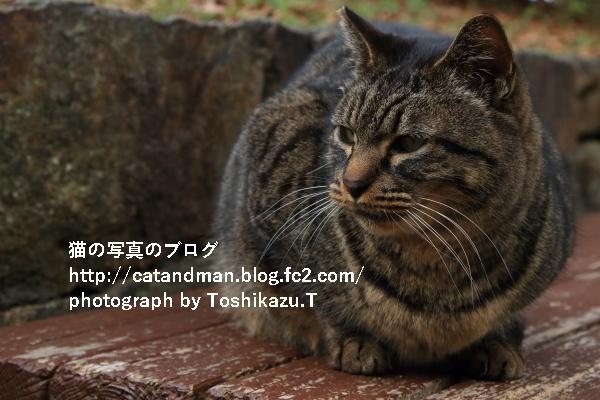 IMG_1722s.jpg