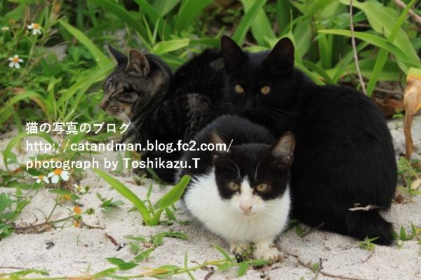 IMG_2650s.jpg