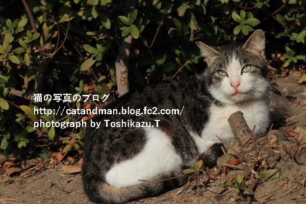 IMG_3935s.jpg