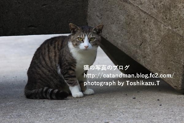 IMG_5398s.jpg