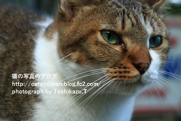 IMG_5438d.jpg