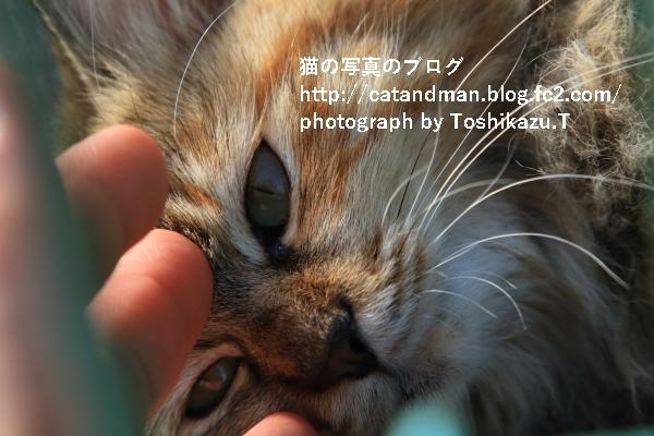 IMG_6146s.jpg