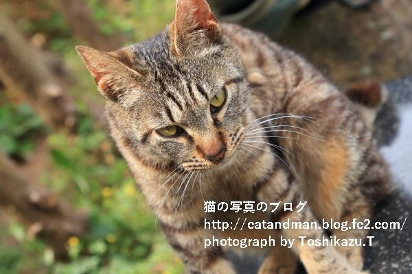 IMG_7574s.jpg