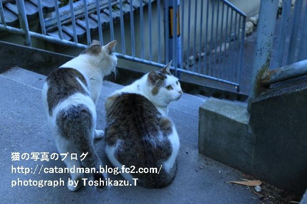 IMG_8848s.jpg