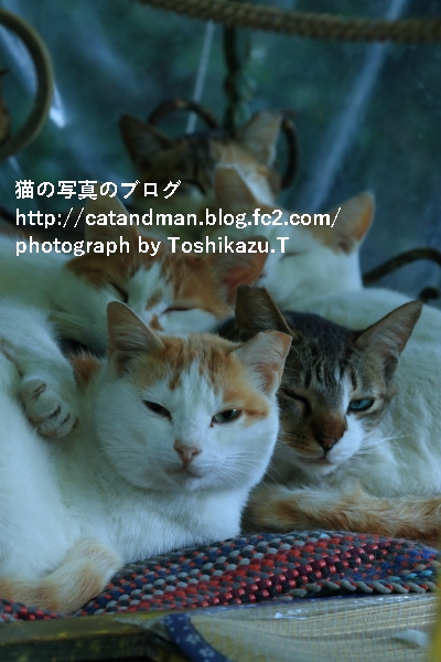 IMG_8883s.jpg