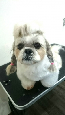 「DOG SALON HOSAKA」のカットスタイル