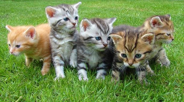 kittens-555822__340.jpg