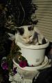 猫鉢_発芽