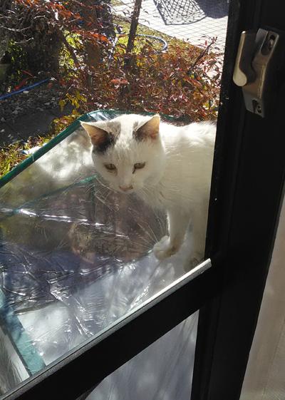 猫鉢_温室