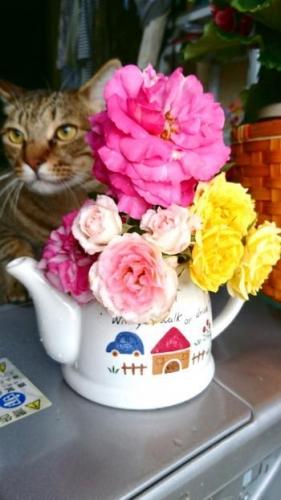 花とにこおいたん_convert_20170525101024