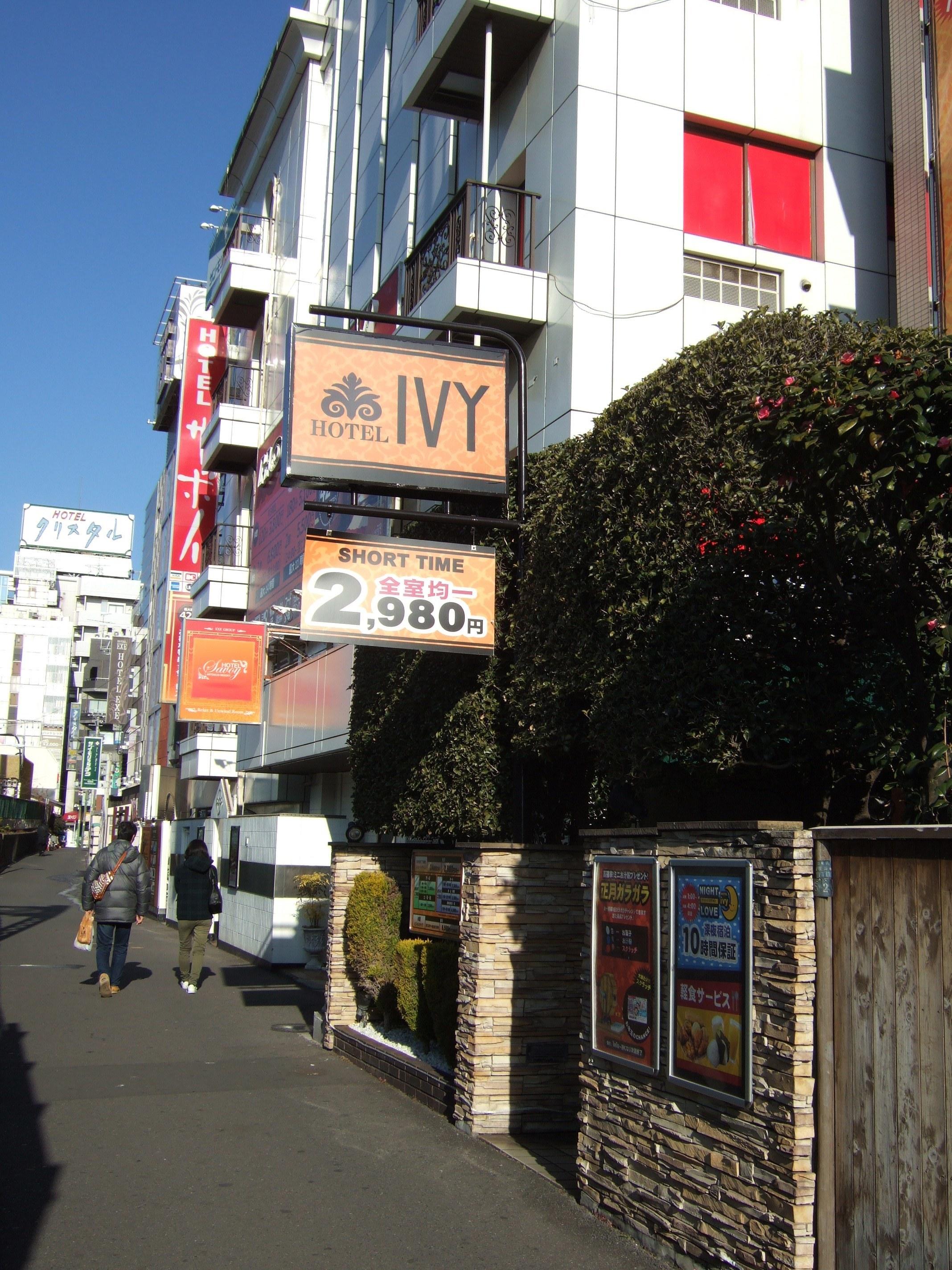 ivy1.jpg