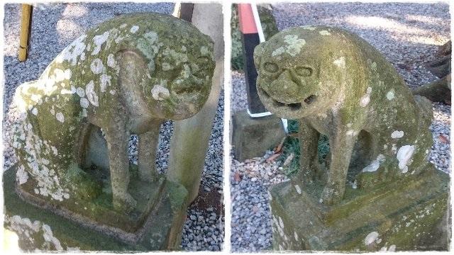 間々田八幡宮・狛犬1