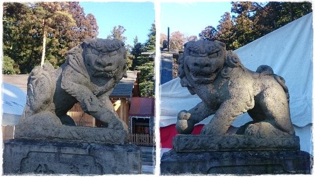 乃木神社・狛犬2