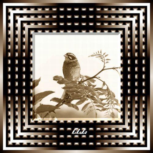 1121-1.jpg