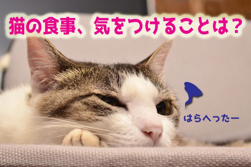 cat422.jpg