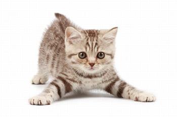 cat_name.jpg