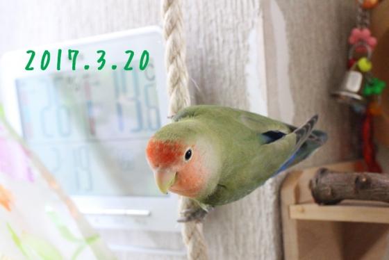 z3256.jpg