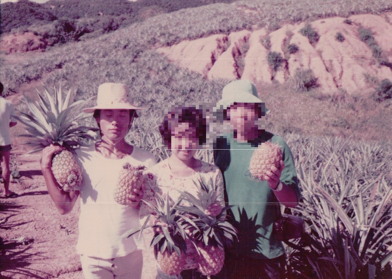 85年 パイン畑
