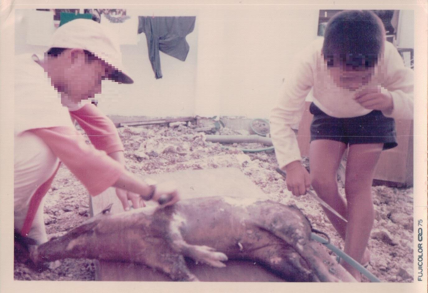 75年 猪の処理