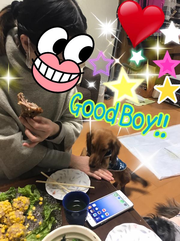 goodboy!