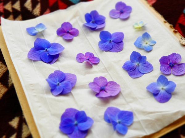 紫陽花の花びら