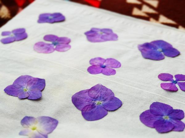 紫陽花押し花