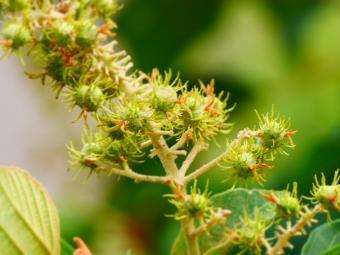 川沿い植物1
