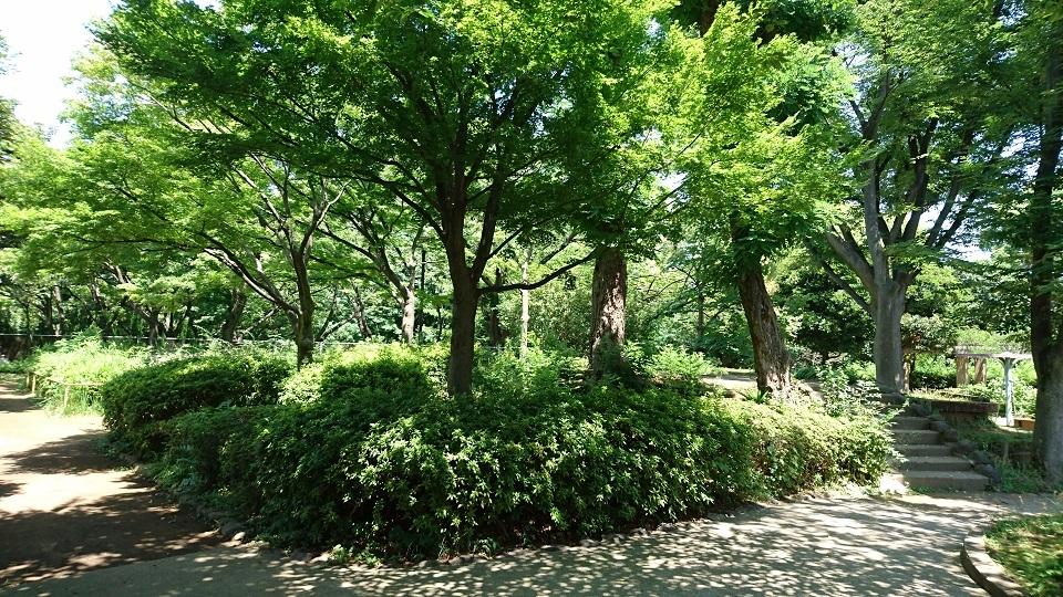 20160704 DSC_4199s大井公園内古墳