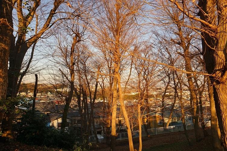 秋葉山3号墳からの東側眺望
