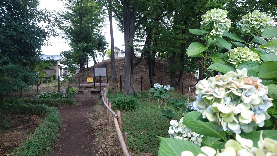 浦和本杢古墳と紫陽花