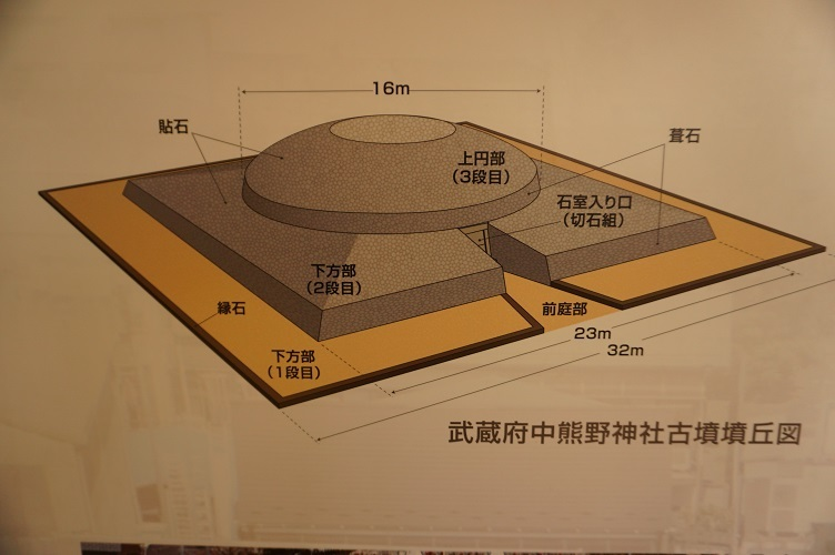 武蔵府中熊野神社古墳展示館内