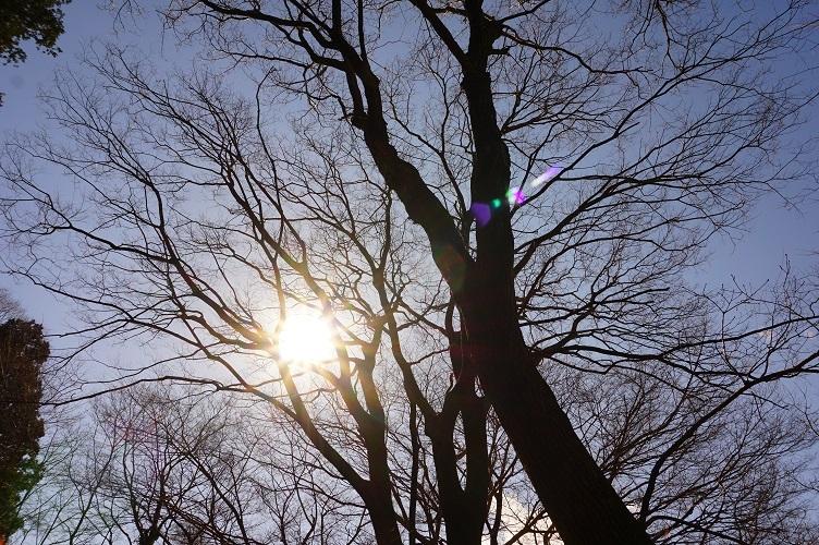 茨城町宝塚古墳10雑木林の太陽