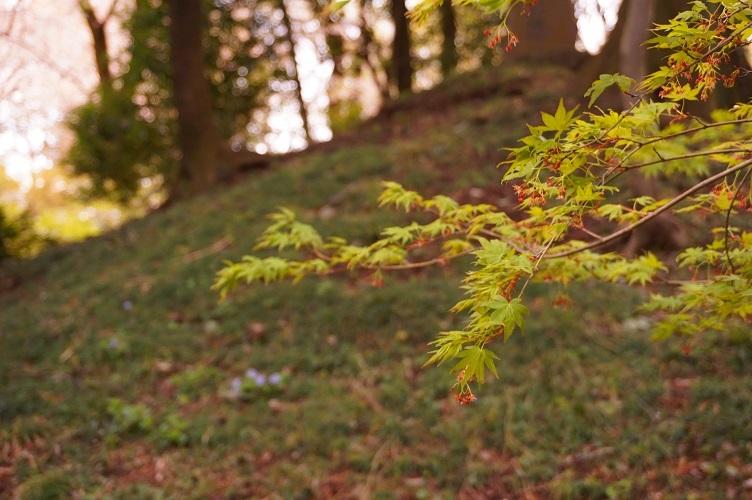 野火止塚と紅葉の若葉