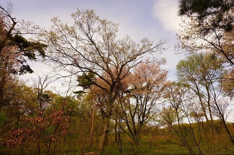 平林寺境内林