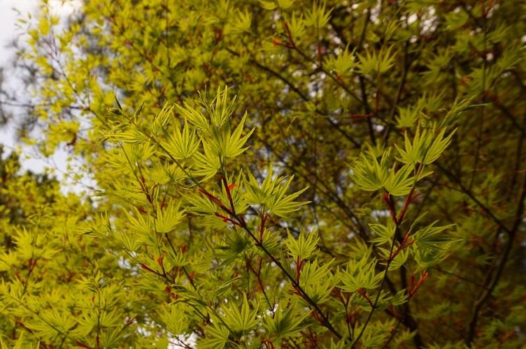 平林寺境内林新緑