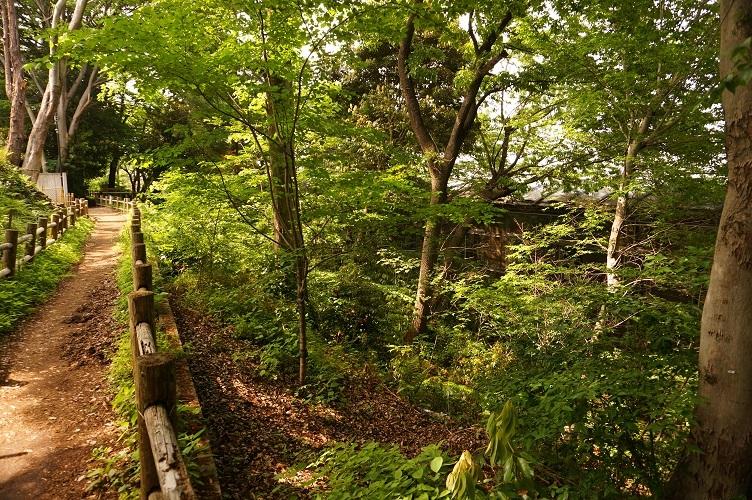 08 田子山富士塚北側崖状地形