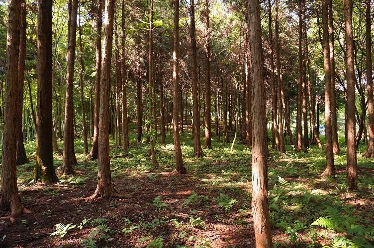 01 富加町杉洞1号墳北の自然地形