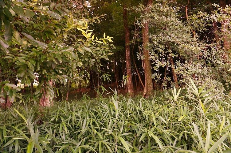 07 富加町蓮野古墳のある木立を南から