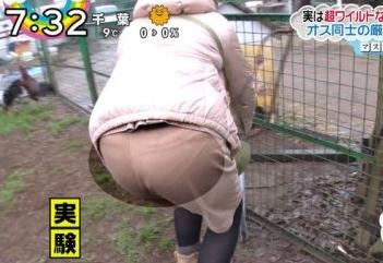 尾崎里紗アナのパンティが透けちゃってら