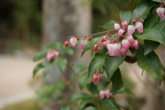 長府庭園 花