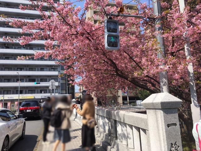 IMG_9859 桜