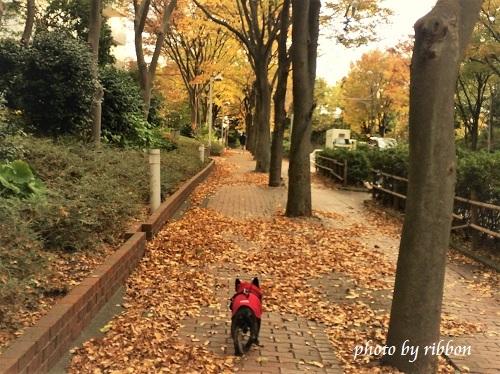 愛犬のお散歩