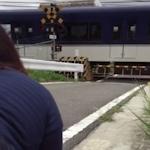 列車が通過してる最中に踏み切りでハメ撮りしてる青姦動画