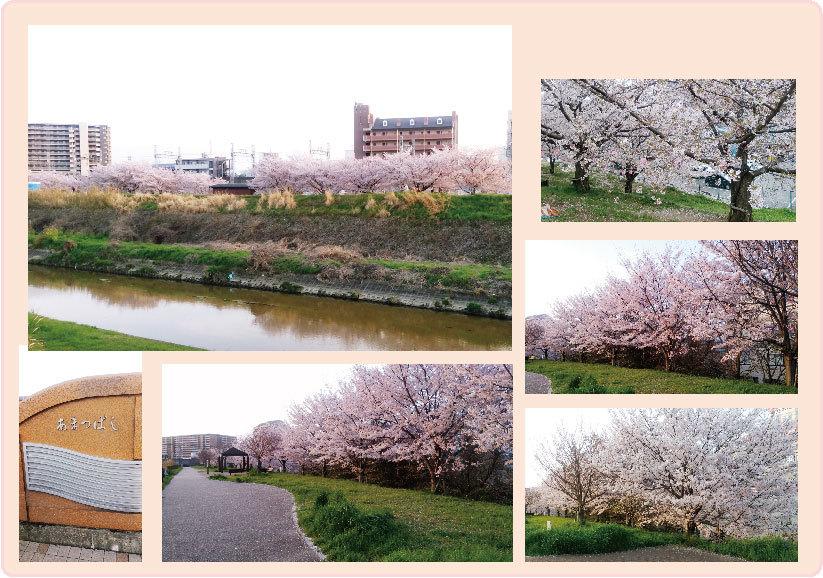 枚方桜コラージュ