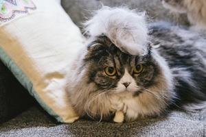猫リサイズ